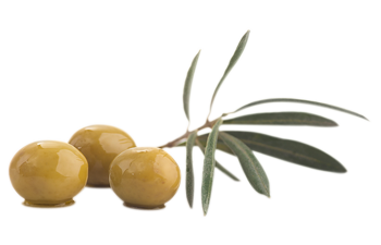 GROWER AND MARKETER OF COBELÉN TABLE OLIVES